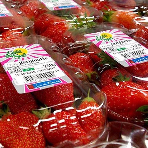 fraise gariguette sud de france goût du sud