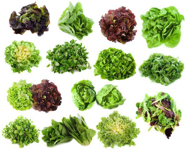 variétés salades