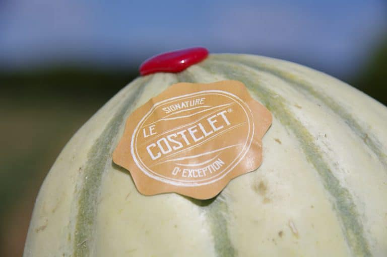 Melon Costelet