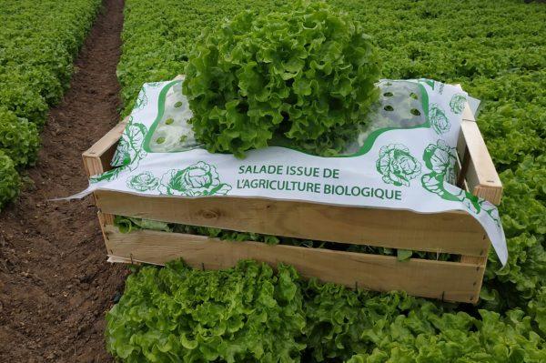 Salades Forcéane